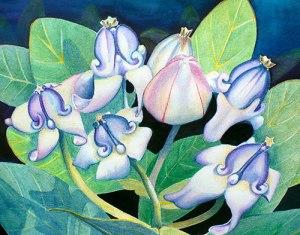 Giant Milkweed by Judith Becker