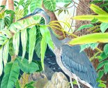 """""""Blue Heron"""" by Judith Becker (Colored Pencil)"""