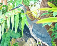 """Blue Heron"" by Judith Becker (Colored Pencil)"