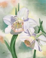 Daffodils-web