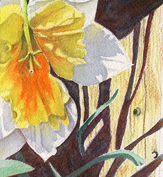 daffodils-series-2-3-by-judith-becker-72ppi