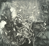 Victoria Goro-Rapoport
